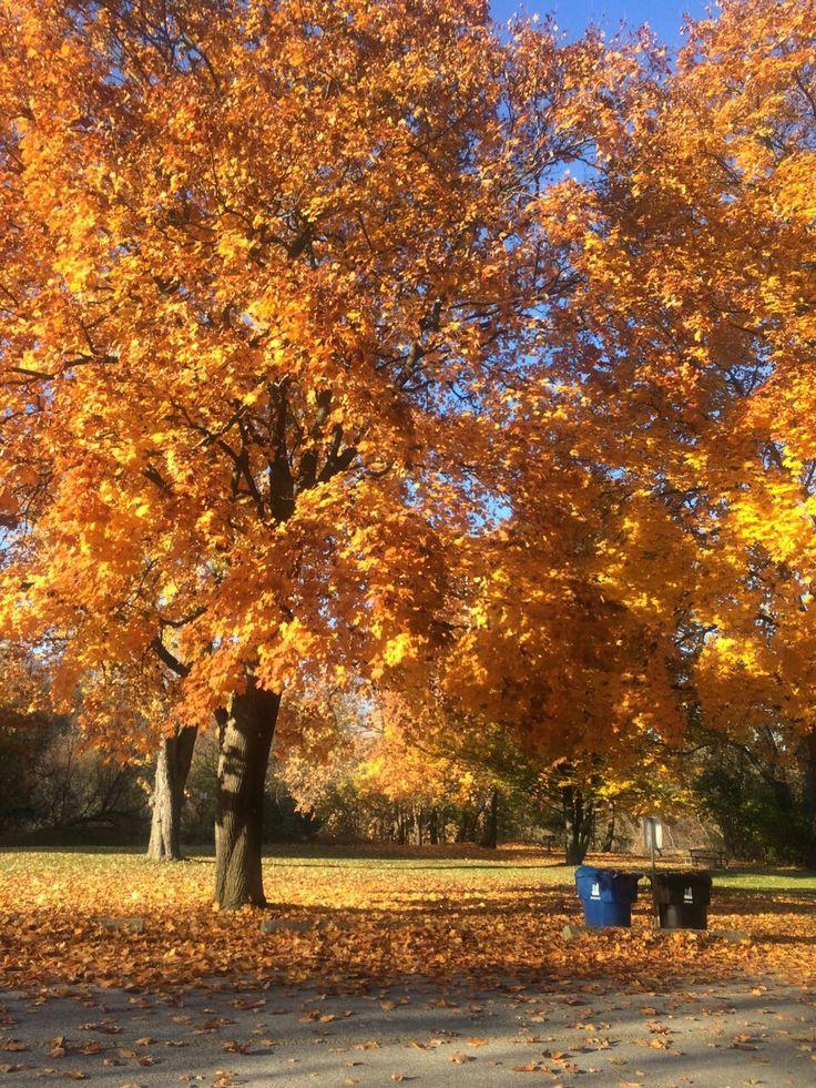 on my way to my morning walk- lasting autumn beauties.