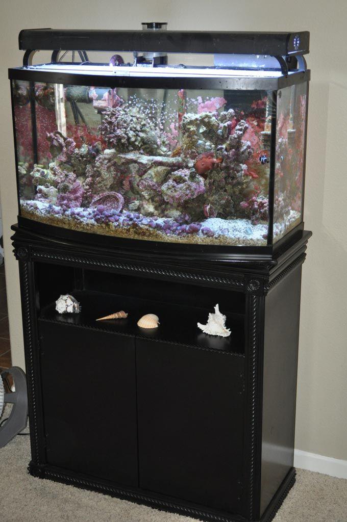 40 Best Unique Aquariums Design Ideas Images On Pinterest