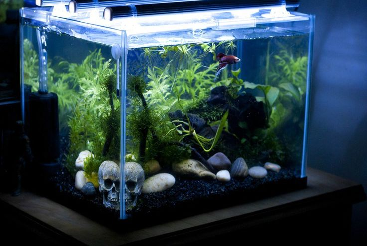 267 best images about betta fish on pinterest betta fish for Fish tank care