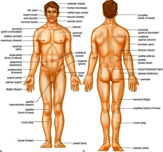 Human Body Parts Name Body