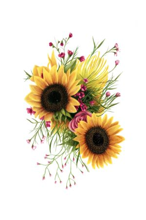 Floral 3 - Sunflowers - Colored Pencil Drawing - Sam Luotonen
