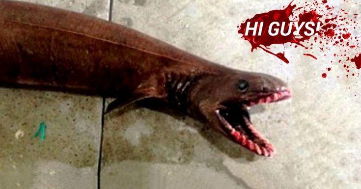 triops prehistoric creature still around today - Google Search