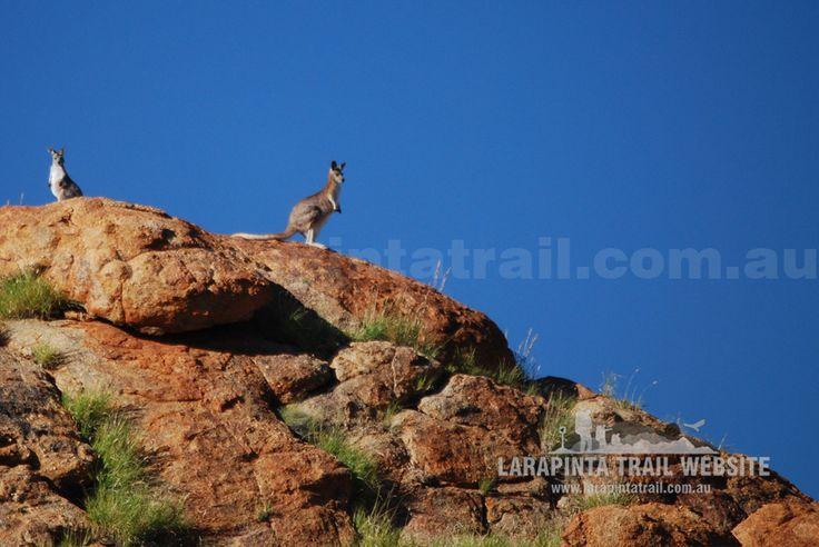 Meet the locals. © Explorers Australia Pty Ltd 2014