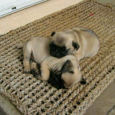 .: Animal Pics, Cute Animal, Pugs Puppies, Sleepy Time, French Bulldogs, Funny Pictures, Puppies Cute, Naps Time, Baby Pugs