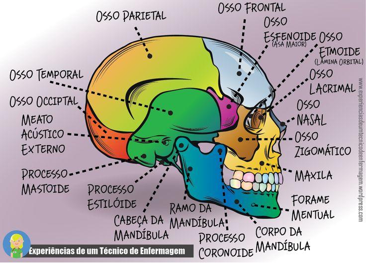 Foto: Um pouco de anatomia básica do Crânio: Vista Lateral  #compartilheconhecimento
