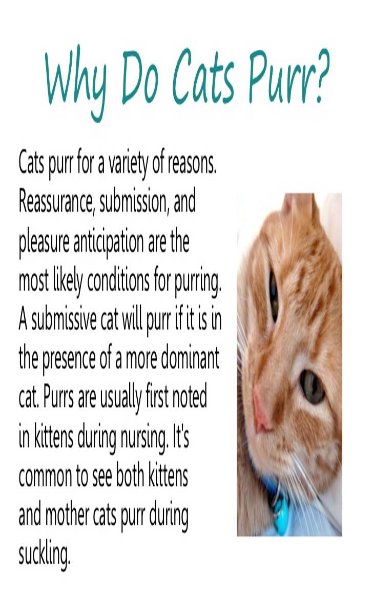Learn All About Cat Purring Cat Guides Why Do Cats Purr Cats Cat Training Tricks