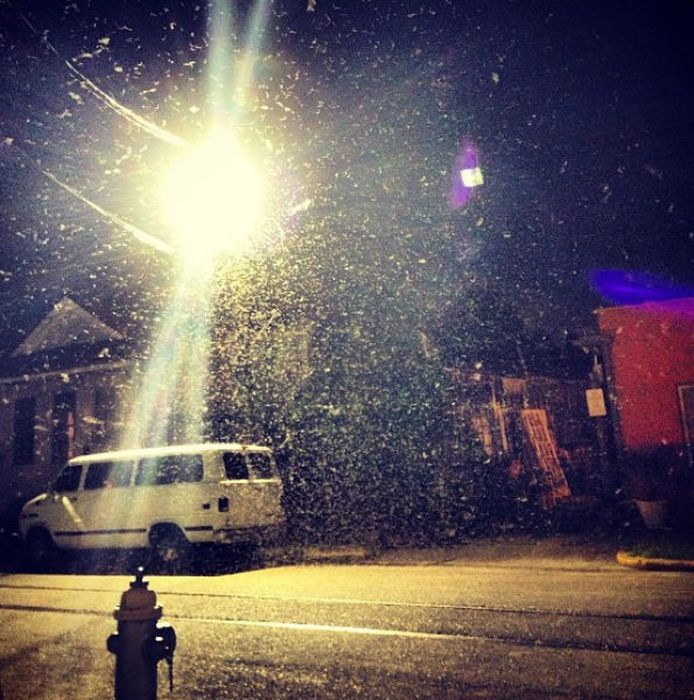 Termite Swarm in New Orleans (29 pics) http://www.skylinepest.com/