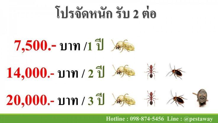 Termite Termites termite bait Eliminating pigeon. Click here to know more http://pestawaythailand.com/