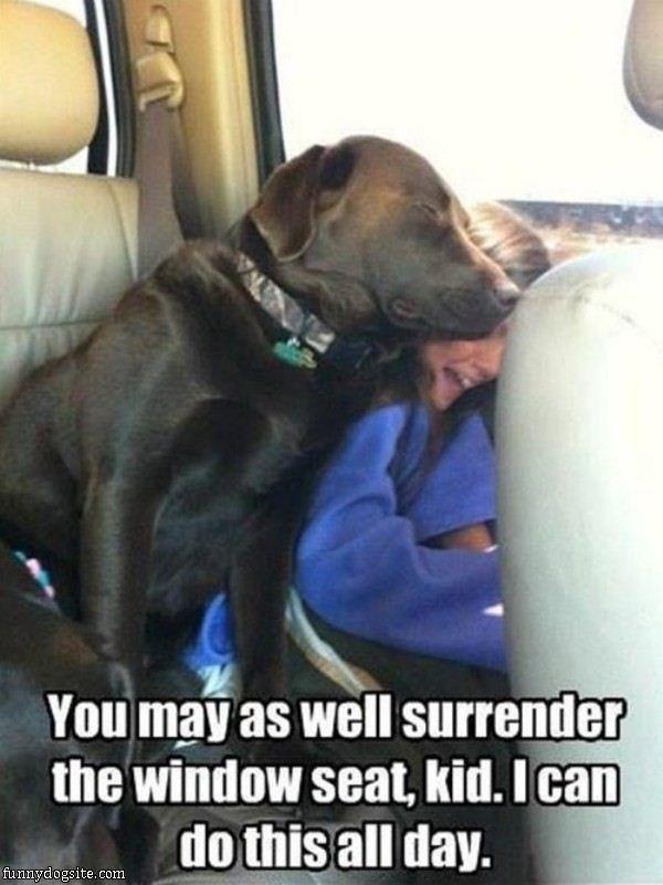 Window Seat - funnydogsite.com
