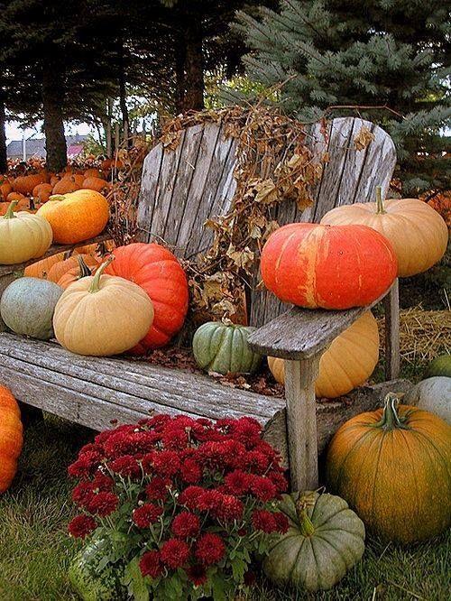 L'automne au jardin : des citrouilles et des feuilles mortes