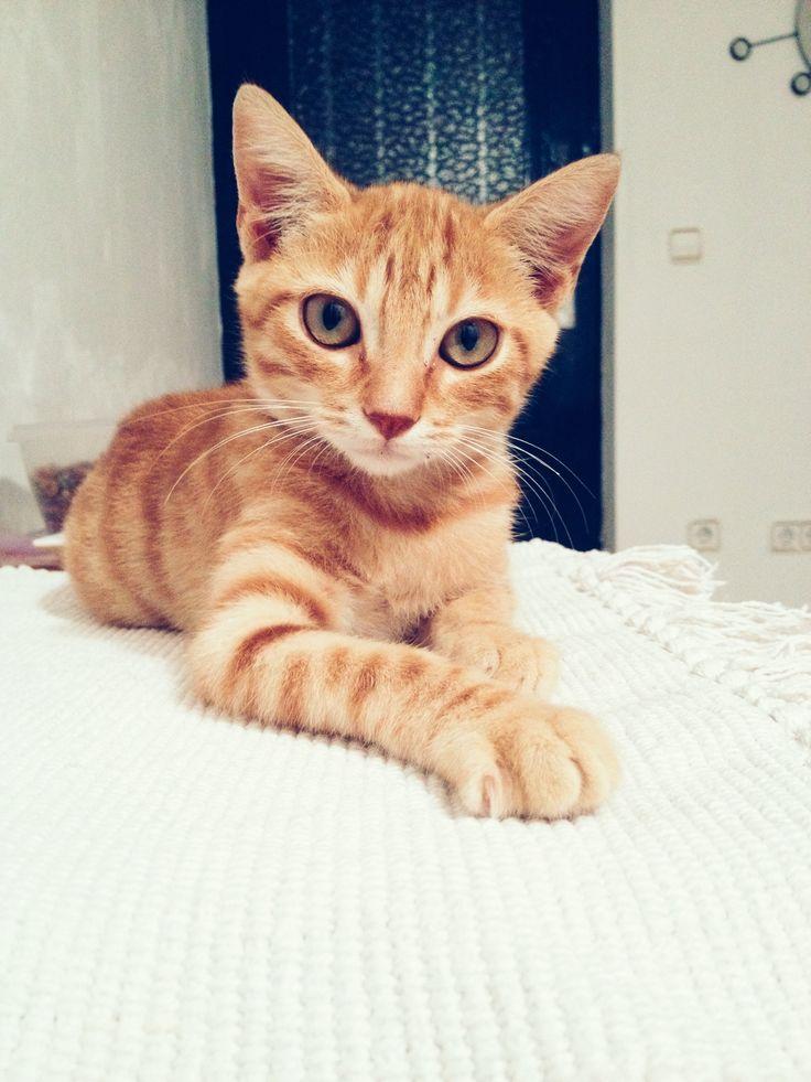 Arthur kitten striking a pose