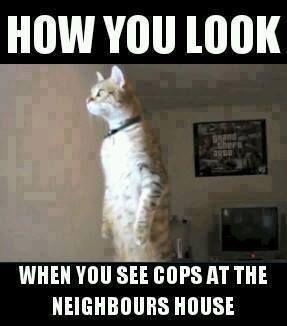 nosey-neighbour-police-raid.