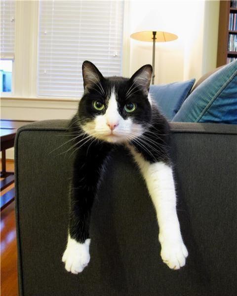 gatto-stravaccato