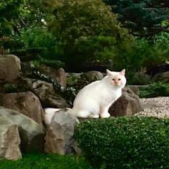 Jardines de estilo asiático de Esprit Zen