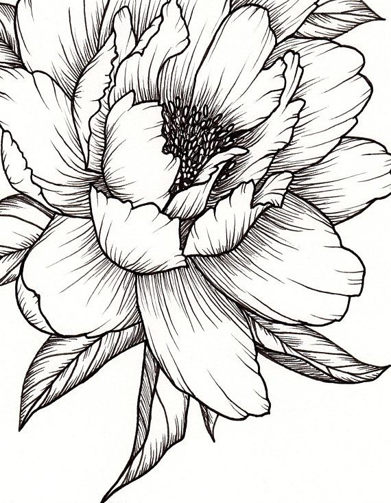 Peony Flower, Art PRINT of Pen Illustration, Flower Drawing, Floral Tattoo, Botanical Line Drawing,