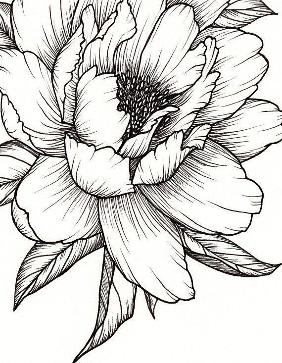 Peony Flower, Art PRINT of Pen Illustration, Flower