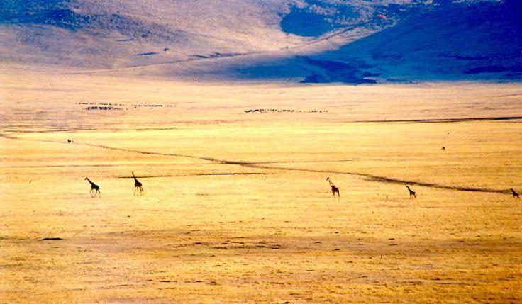 Last Minute Viaggio in Kenya e Tanzania, Viaggio Avventura nel Mondo Africa  www.grandiorizzonti.it