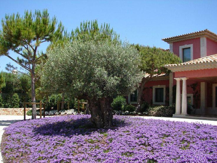 plantas jardim mediterraneo1000 ideias sobre Jardim Mediterrâneo no