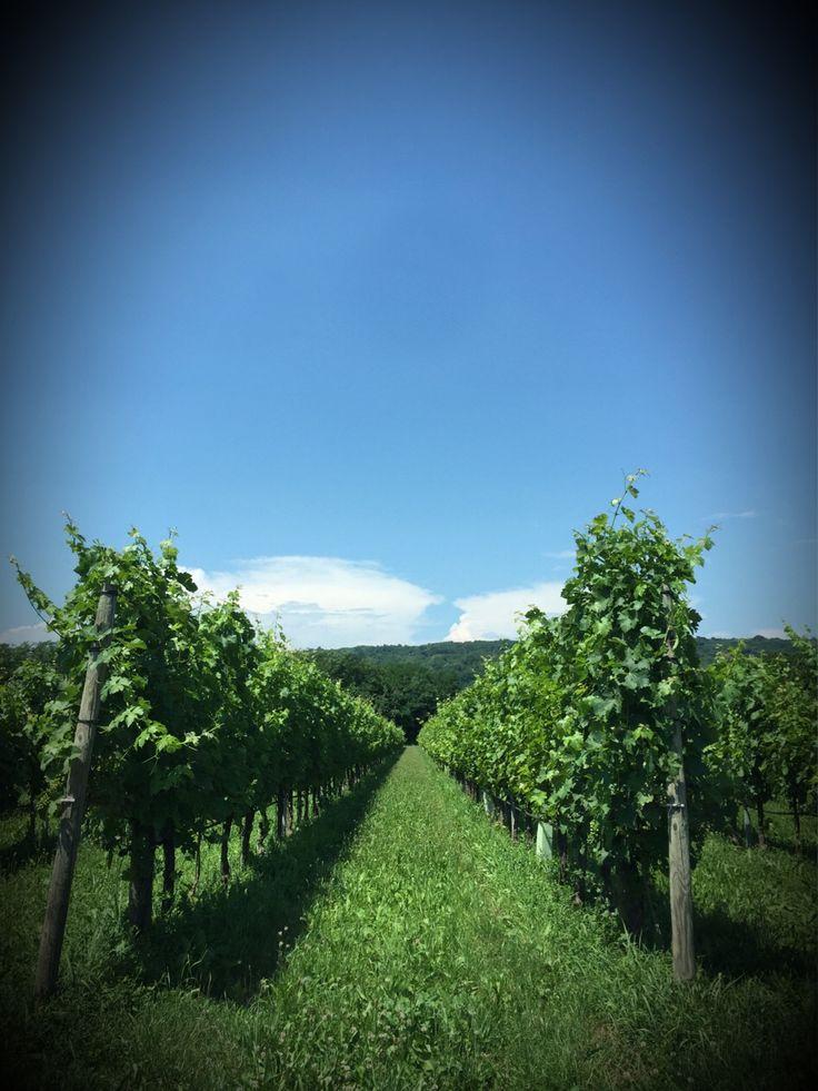 Oggi si parla di vino. Visto il caldo speriamo in cantina e non all aperto.  #webkitchen #treviso #alwaysontherun