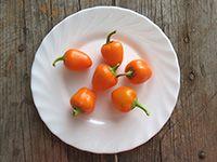Перец Мини-белл оранжевый  Ранний, сладкий, очень урожайный. Плоды короткие кубические, с толстой стенкой.