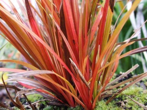41 best plants images on pinterest   gardening, flowers garden and, Gartenarbeit ideen
