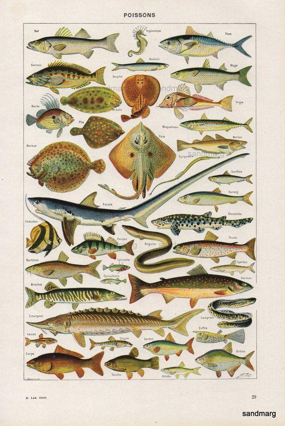Gráfico francés Poisson pescados del tiburón salmón Stingray