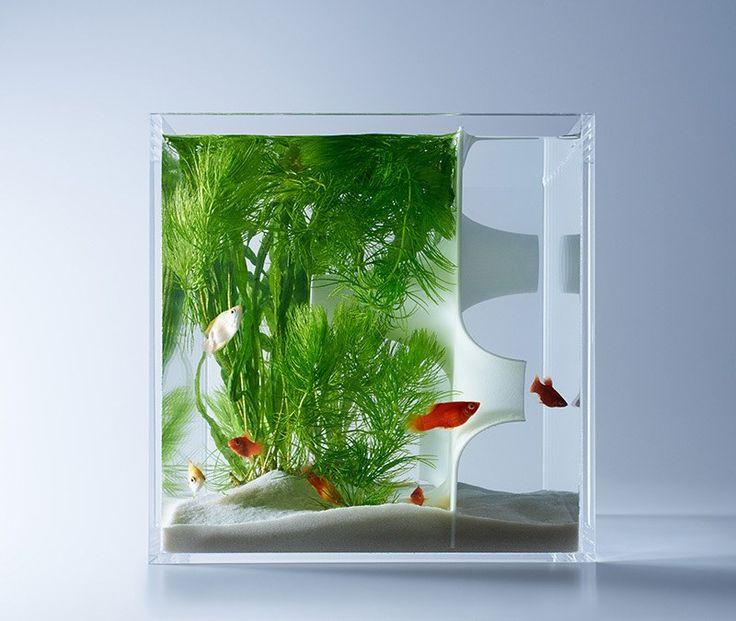 NEW FISH TANK DESIGN | 20 GALLON AQUARIUM - YouTube