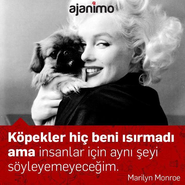 """""""Köpekler hiç beni ısırmadı ama insanlar için aynı şeyi söyleyemeyeceğim."""" -Marilyn Monroe"""