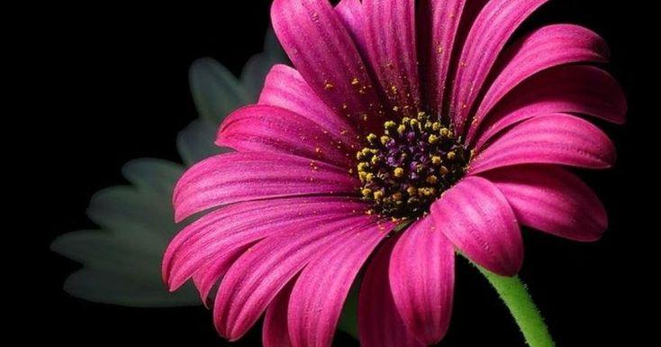 Estupendísimo truco para prolongar e intensificar los colores de las flores