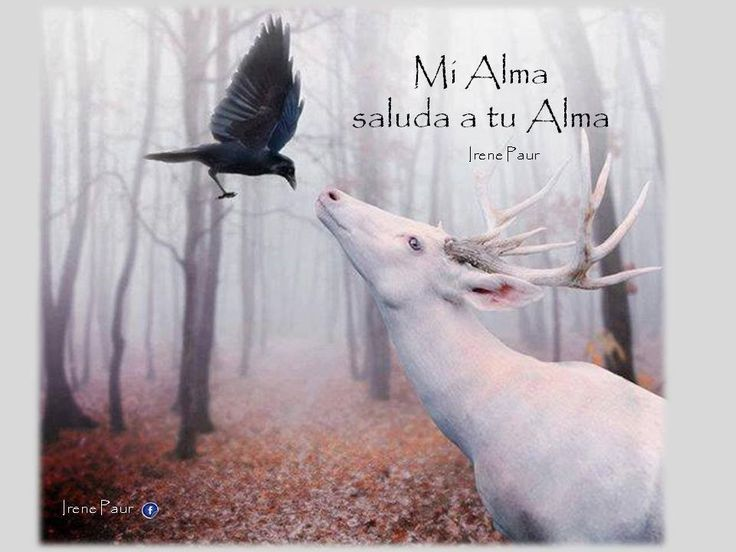 Mi alma saluda a tu Alma.. Búscame en facebook | Citas ...