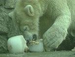 Flip de beer : zorgen voor een ijsbeer