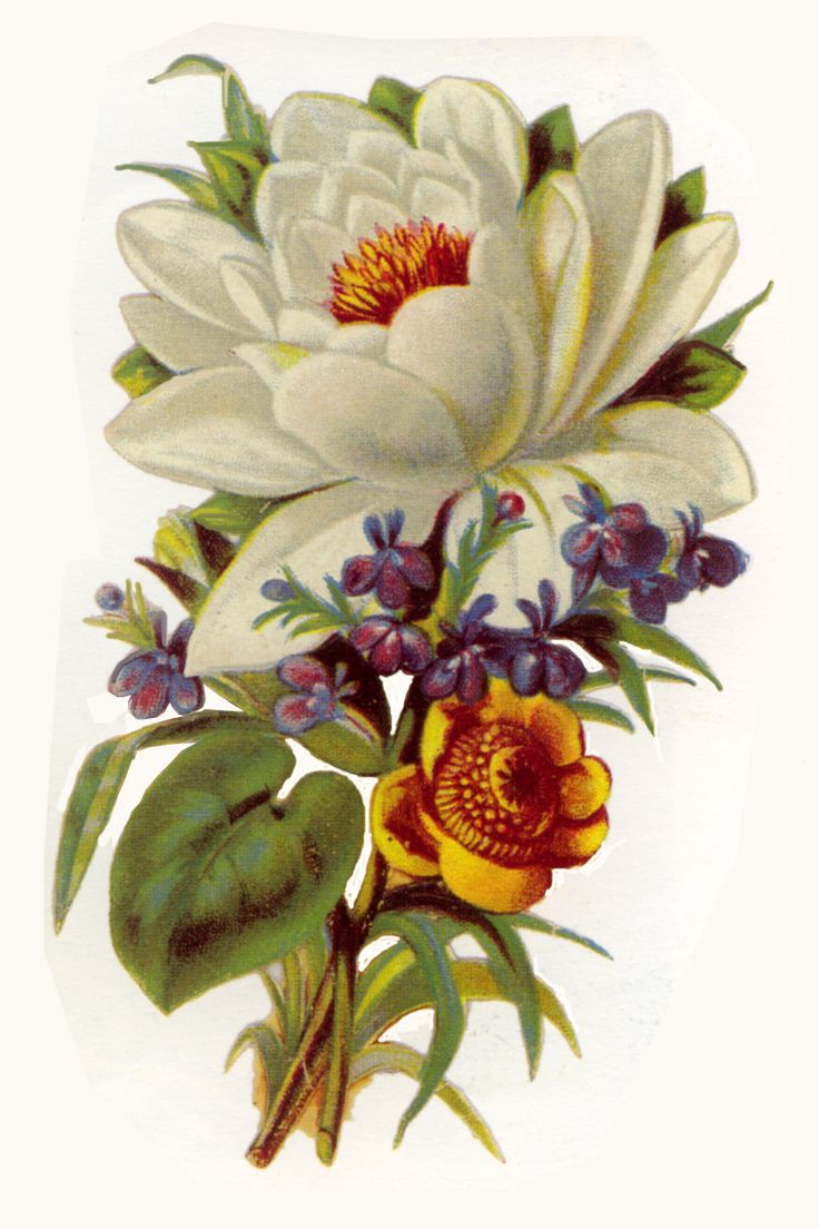 Free Victorian Clip Art  Artbyjean  Vintage Clip Art: Beautiful Bouquets  Of Flowers With