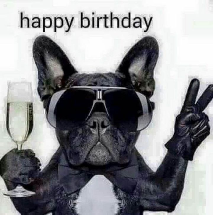 101 Funny Happy Birthday Dog Memes For Paw Lovers Everywhere Funny Birthday Pictures Birthday Images Funny Funny Happy Birthday Pictures