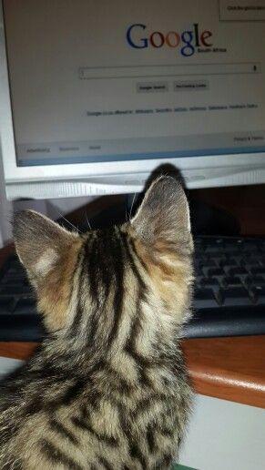 Google kitty