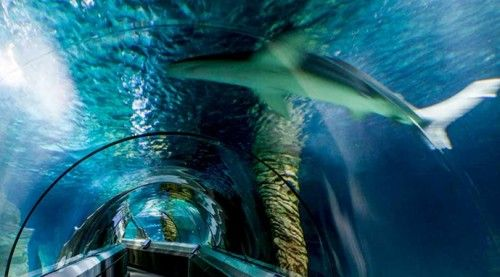 Underwater World and Mooloolaba day tour