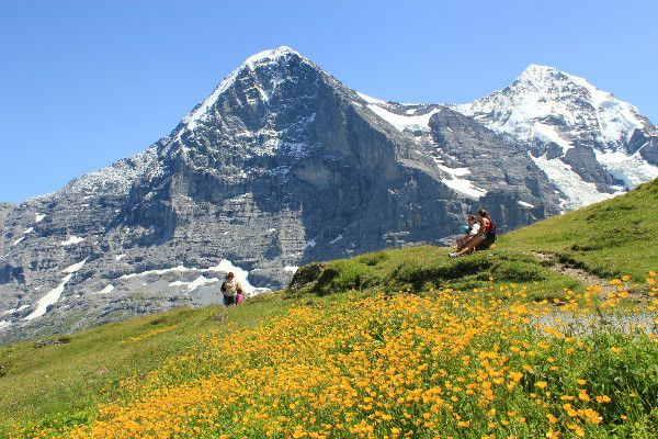 WILDFLOWERS OF THE BERNESE OBERLAND, Switzerland tours | Alps and ...