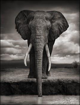 portrait of an elephant by Nick Brandt.