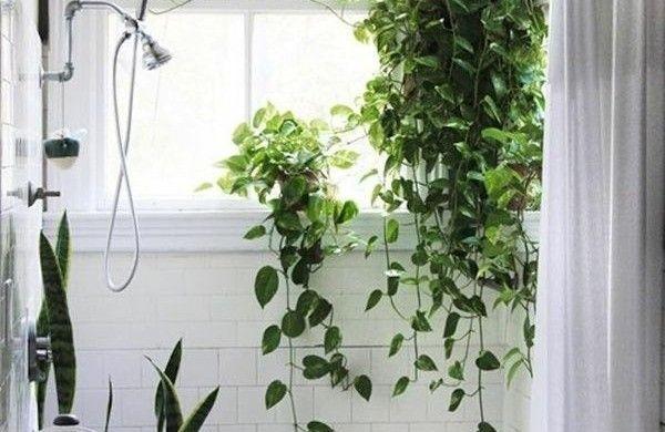welche zimmerpflanzen brauchen wenig licht efeutute badezimmer pflanzen