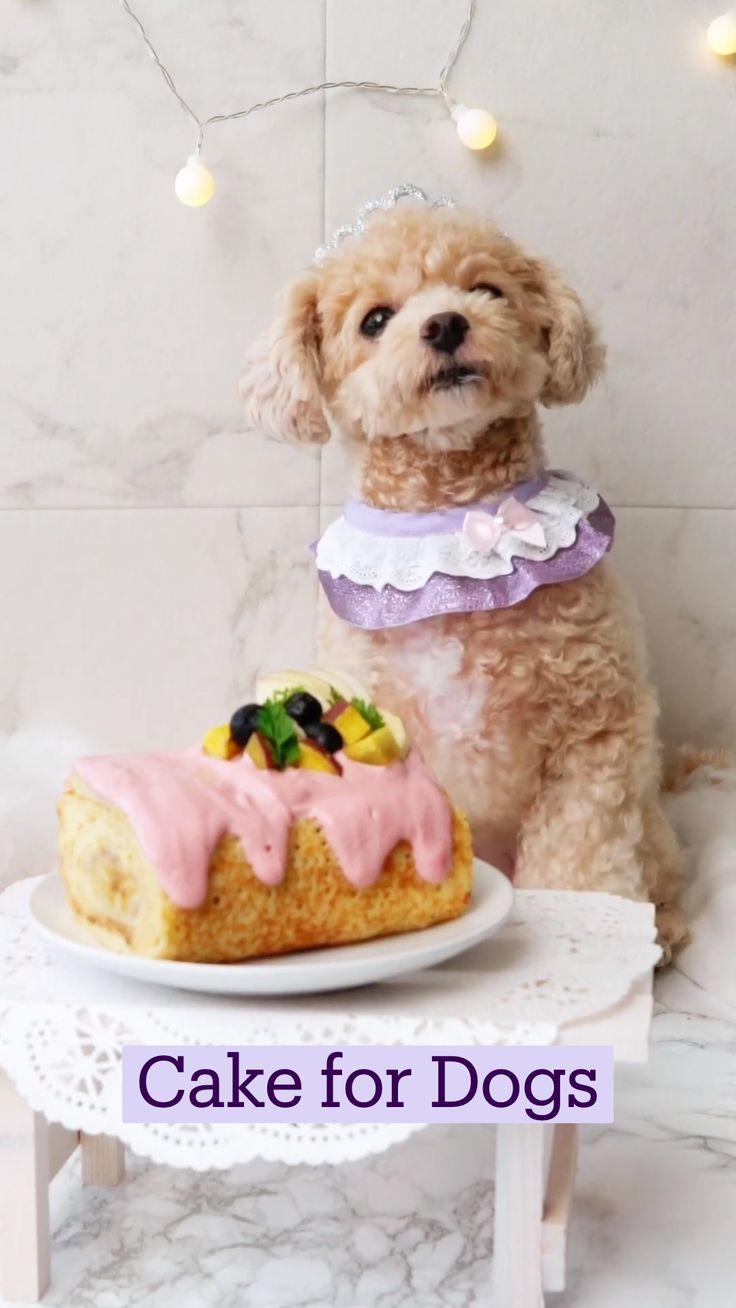 Köstliche Desserts, Delicious Desserts, Dessert Recipes, Yummy Food, Fun Baking Recipes, Dog Food Recipes, Cooking Recipes, Homemade Dog Treats, Pet Treats