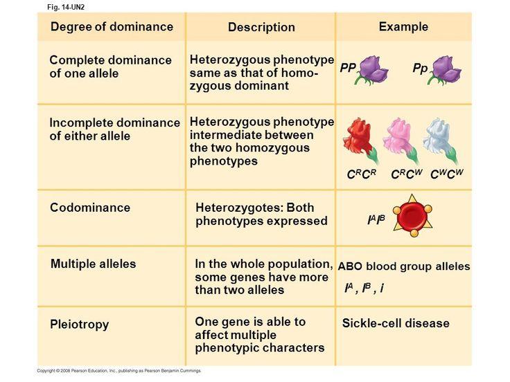 types of spondylolisthesis