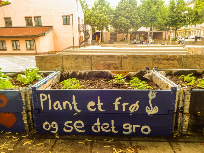Hage-Crew-Urban-Farming