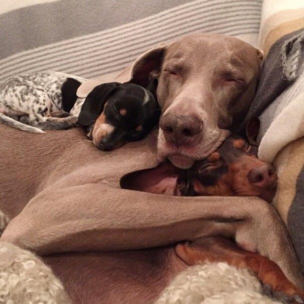 harlow-sage-indiana-reese-cute-dog-photos-9