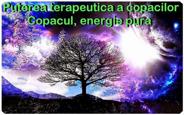 OPINII PERSONALE: Un DOCUMENTAR de exceptie! Puterea terapeutica a copacilor - Copacul, energie pura