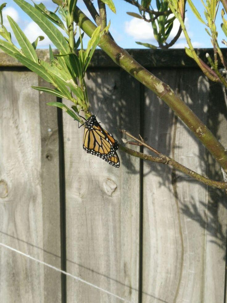 Moths, Butterflies and Caterpillars