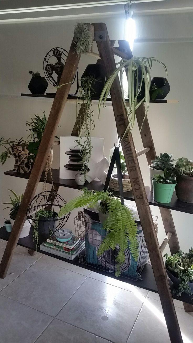 Spectacular My vintage ladder shelf indoor plants