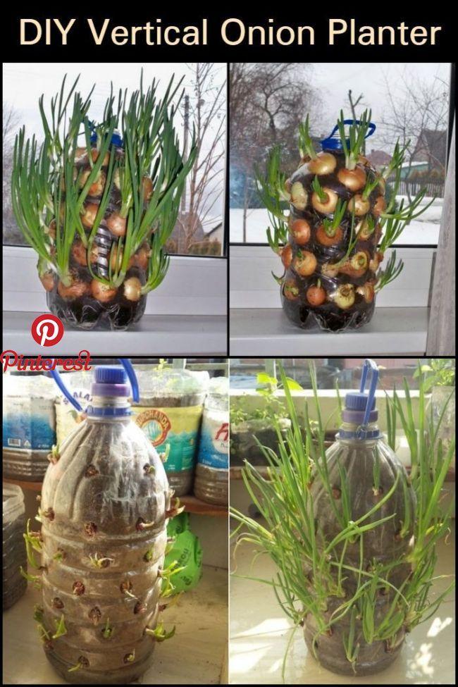 Diy Vertikaler Zwiebelpflanzer Wachsen Sie Das Ganze Jahr Uber Zwiebeln Direkt In Ihrer Kuche Mit Diesem Vertikale Pflanzen Zwiebeln Anbauen Zwiebel Pflanzen