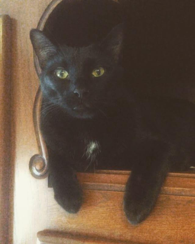 Sick baby - #cat #catsofinstagram #blackcat #wicksandbeans