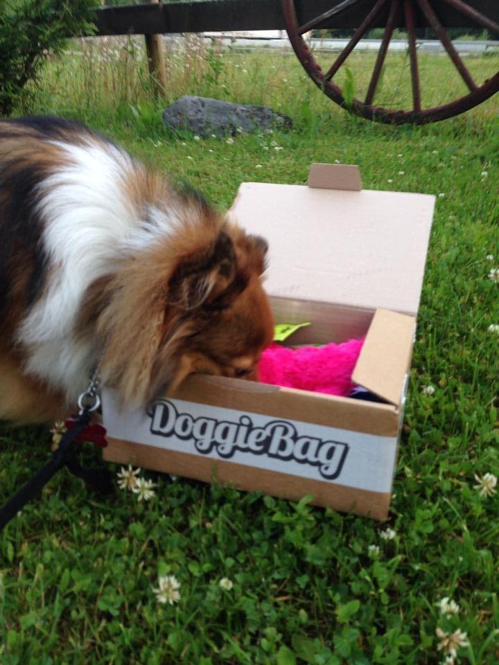 Nikita - DoggieBag.no #DoggieBag #Hund