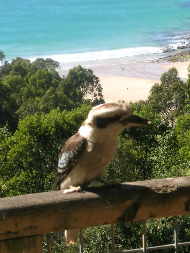 Kookaburra & the beach - Rose Cottage - Wye River - Great Ocean Road