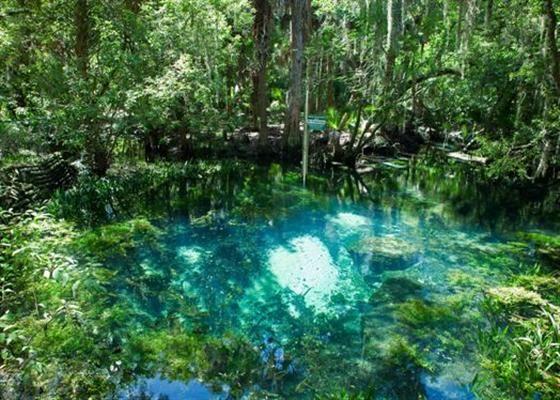 Botanical Gardens Tampa Florida